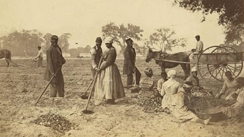 A sepia-toned photo shows African-American slaves working in the sweet potato fields on the Hopkinson plantation, South Carolina, in 1862. | Episode 1 | The Cause (1861)